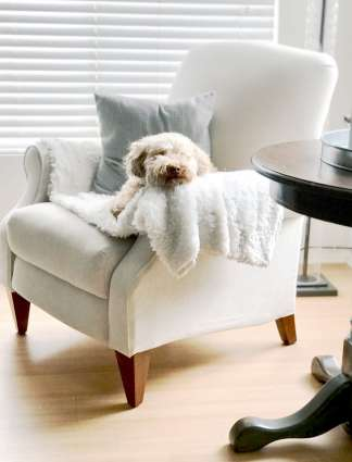 DIY Dining Table and Chairs Makeover • Ideas & Tutorials, including this farmhouse table makeover Schnoodle Dog Lover Schauzer Poodle Mix Puppy-min